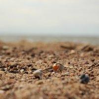 Пляж 1 :: Иван Веризуб