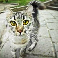 Самая Умная Кошка в Мире :: Алексей Латыш