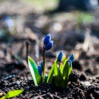 цветы :: Алина Гриб