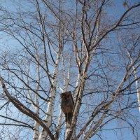 Картинки воробушки в последний день зимы