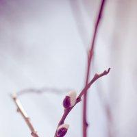 Весна :: Pavel Nazarenko