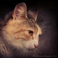 Портрет кошки [III] :: PersONA Incognito