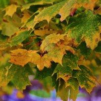 листья :: Елена Громова