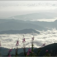 Туман или облака :: galina tihonova