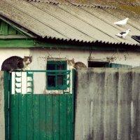 Домик в деревне :: Игорь Попов