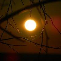 Утомлённое солнце... :: Lina Liber
