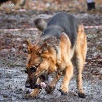 Собачье счастье 5 :: Виталий Латышонок