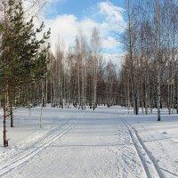 последний  день  зимы :: михаил пасеков