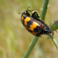 Жук жук жук :: Ксения Савотина