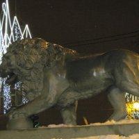 Лев зимой. :: Маера Урусова