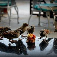 Египетские воробушки :: Диана Вакуленко