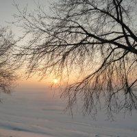 Солнце на ветке :: Екатерина Иванова