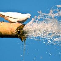 воды бы глоток :: человечик prikolist