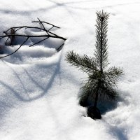 Из-под снега :: Александр Садовский