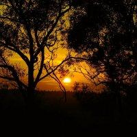 Закат за деревьями в деревне :: Alla Markova