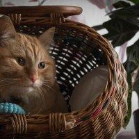 Апрельский кот. :: Anna Tvays