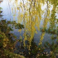Плачущая осень :: Юрий Cтарков