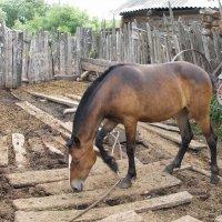 У лошадки выходной :: Владимир Анакин