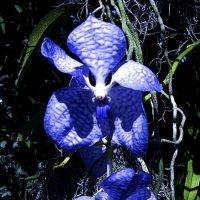 цветы :: foto kto