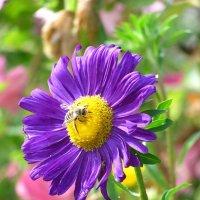 Пчёлка :: Ольга Боровикова