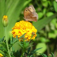 Бабочка :: Ольга Боровикова