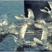 бьются крылья белые по ветру ... :: Maxxx©