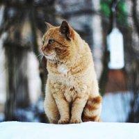 Кот, который гуляет сам по себе :: Алёна Белянина