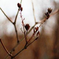Весенний этюд :: Алёна Белянина