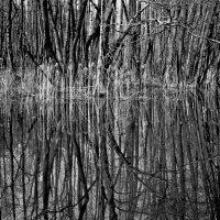 Весна на болоте :: Владимир