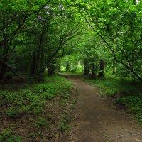 IMG_5419 - Не каждый день солнечно :: Андрей Лукьянов