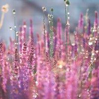 Цвет моей мечты :: Zifa Dimitrieva