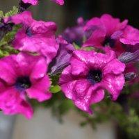 Цветочный хоровод-154. :: Руслан Грицунь