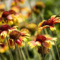 Степные цветы :: Алексей Бойко