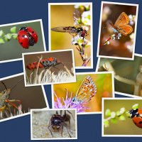 фотоколлаж насекомые макро :: snd63 Сергей
