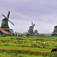 Деревня Заансе-Сханс (Нидерланды) :: Евгений Дубинский