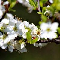 Вот и весна. :: Татьяна Бравая