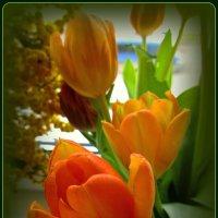 Весна на подоконнике :: Сергей Карачин