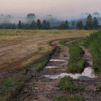 утренний туман :: sergej-smv