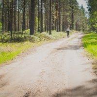Лесная прогулка :: Михаил Кучеров