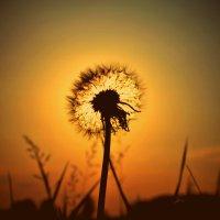 Солнце в теле. :: Alina Serbskay