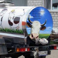 """Мурка: """"Интересно, какое же сегодня молоко нам привезли парное или стерилизованное?"""" :: Валерий Рыкунов"""