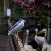 Птица :: Александр Деревяшкин