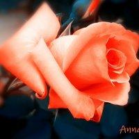 Роза :: Анна Y-Blare