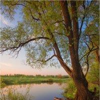 Вечер у реки Угры... :: Александр Кукринов