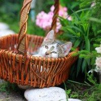 Отдых кота :: Мария Вылегжанина