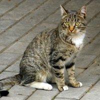 Музейный кот. :: Елена