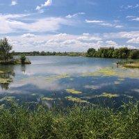 Заросший старый сельский пруд :: Елена ))