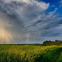 Летний дождь... :: Константин Филякин