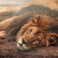 Царь - просто царь... :: олег