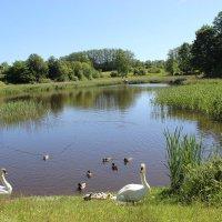 Лебединое семейство :: Mariya laimite